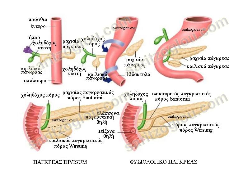 divisum1