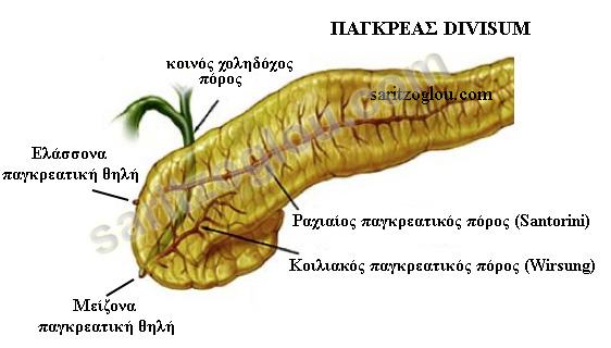 divisum2